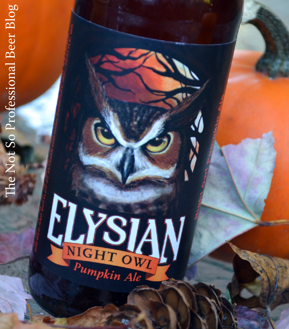 red chair nwpa clone weird arm chairs the not so professional beer blog review night owl pumpkin ale elysian brewing