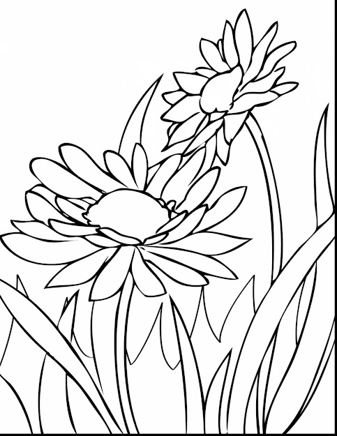 Magnificent Spring Flower Coloring Pages Printable With Spring Flowers  Coloring Pages And Preschool Spring Flowers Coloring