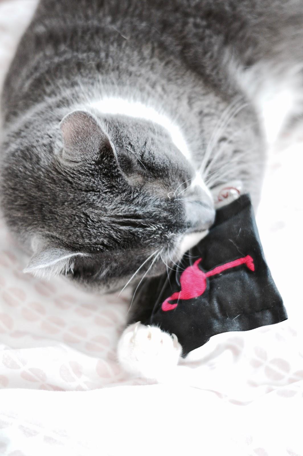 miaoubox, la box qui rend les chats heureux