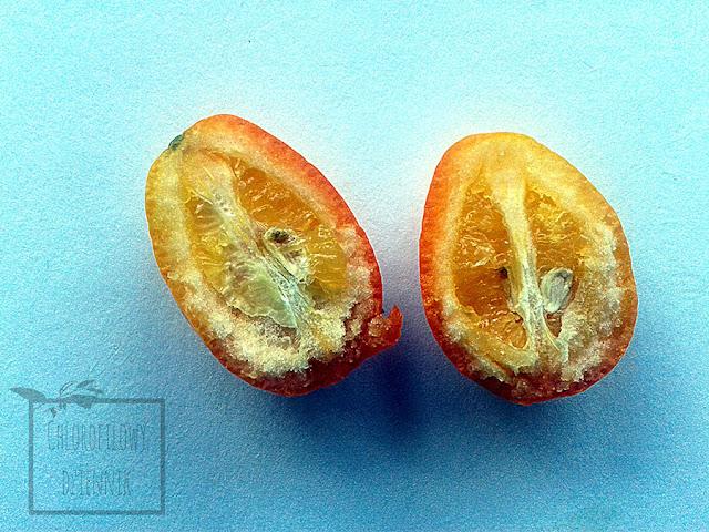 Kumkwat - Citrus japonica - owoce. Zdjęcia w całości i wnętrza owocu, jak smakuje i jak jeść kumkwaty,