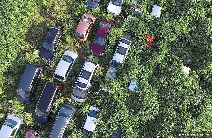Some of the cars have entirely disappeared in the wild grass - Never-Before-Seen Images Reveal How The Fukushima Exclusion Zone Was Swallowed By Nature