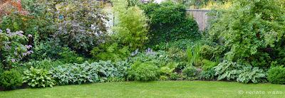 Schöne Pflanzung - Halbschatten oder Gehölzrand - mit Christrosen, Funkien, Gräsern