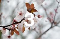 http://www.otchipotchi.com/2018/03/almost-spring.html