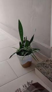 Vaso de cerâmica - DIY