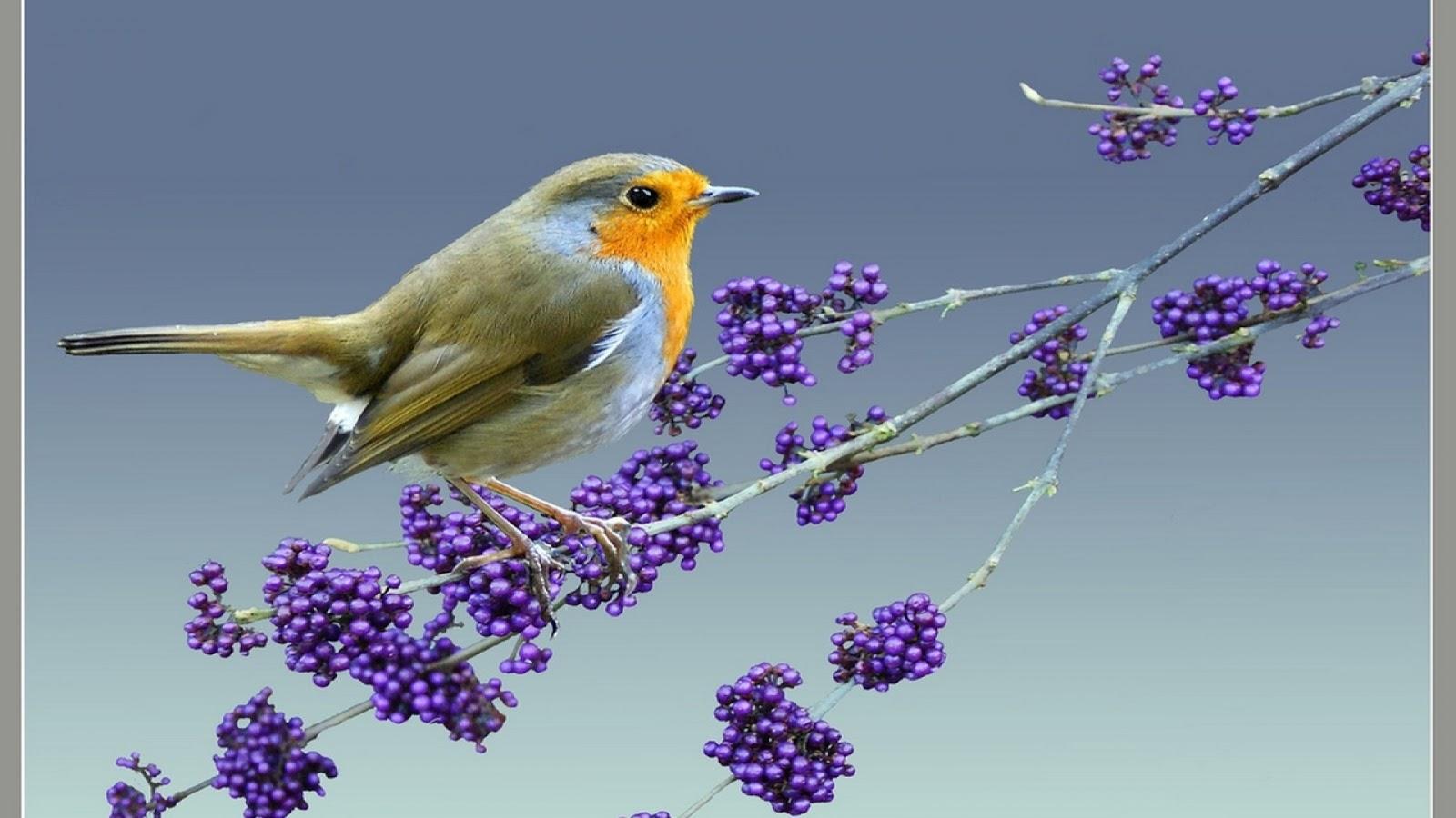 خلفية طير ذو دقن اصفر, Wallpapers, Wallpapers Birds, Wallpapers 8k, 8K خلفيات, خلفيات, خلفيات طيور,