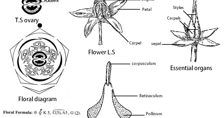 Simple Atom Diagram Sony Cdx Gt360mp Wiring All Biology Classes: Technical Description Of Calotropis Gigantea