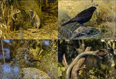 flora, fauna si geologie reprezentative parcului national muntii Macinului