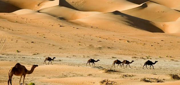 حيوانات الصحراء