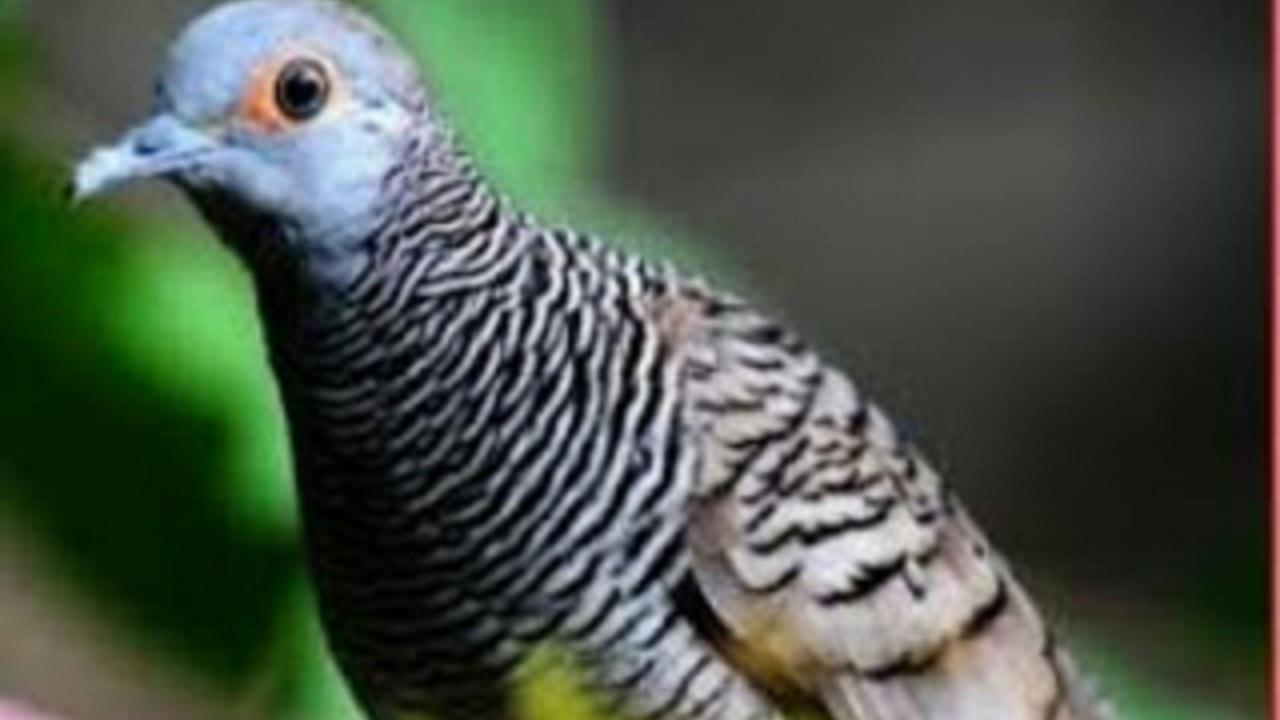 5 Burung Ini Memiliki Mitos Yang Diantaranya Bikin Merinding