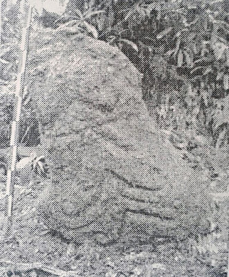 Gambar Situs Gunung Gentong Peninggalan Tradisi Budaya Megalitik Di Kawasan Gunung Subang, Kuningan  - Jawa Barat