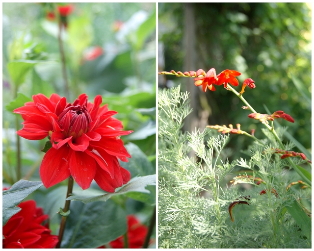 Garten Dahlien blühen den ganzen Sommer