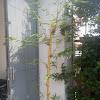 5 Khasiat Bambu Kuning Yang Belum Diketahui Banyak Orang
