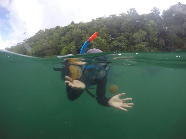 Berenang bersama ubur-ubur di Danau Kakaban