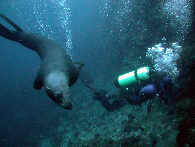 Divining, Robinson Crusoe Island, Chile.