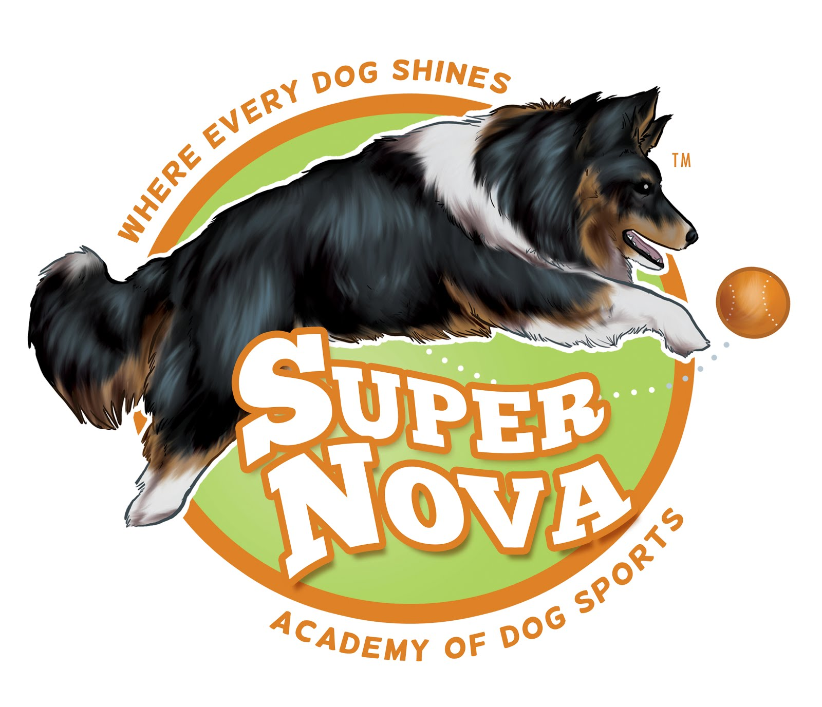 Specializes in puppy training, basic dog obedience training and dog agility training