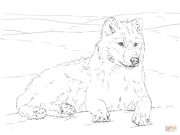 Click The Arctic Wolf Coloring Pages To View Printable Version Or Color It  Online Patible With Ipad And Android Tablets