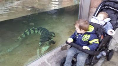 zoo palmyre charente maritime  crocodile