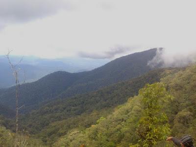 Hutan Cagar Alam