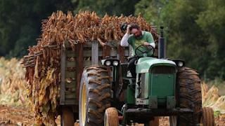المساعدات الحكومية التي تبلغ قيمتها 12 تريليون دولار التي قدمتها حكومة ترامب للمزارعين المتضررين من الرسوم الجمركية