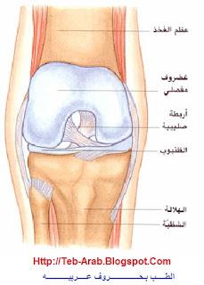الطــب بحـروف عربيـه الالام الركبه ملف شامل الاسباب التشخيص العلاج طرق الوقايه