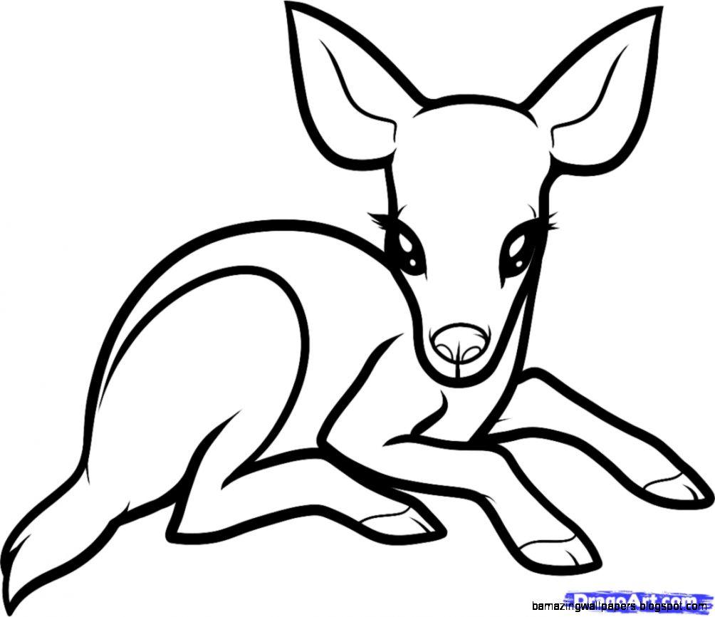 Easy Cute Baby Animal Drawings Amazing Wallpapers
