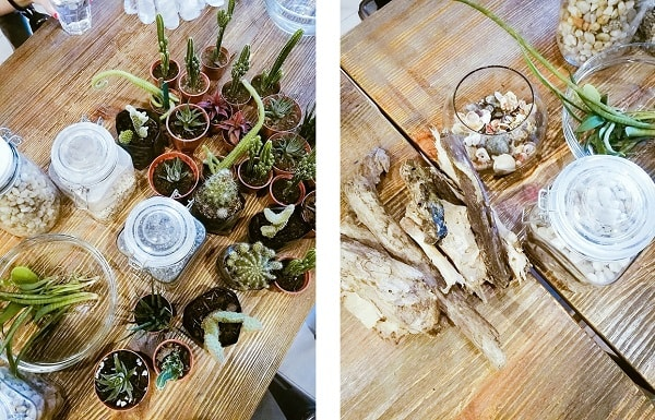 How to Make Your Own Terrarium