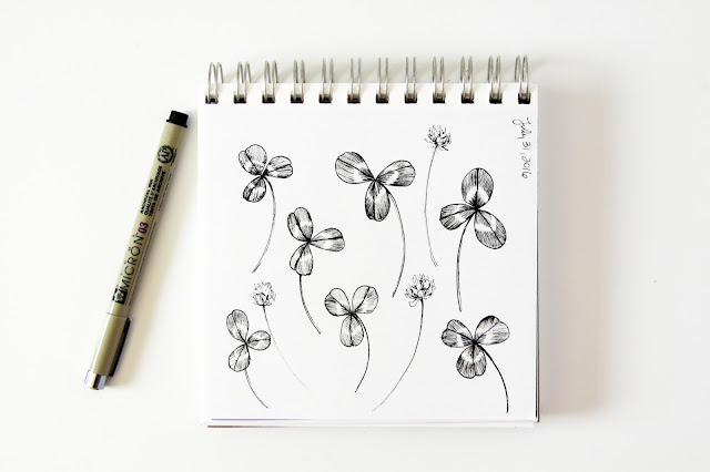clover, sketchbook, line drawing, botanical sketchbook, Anne Butera, My Giant Strawberry