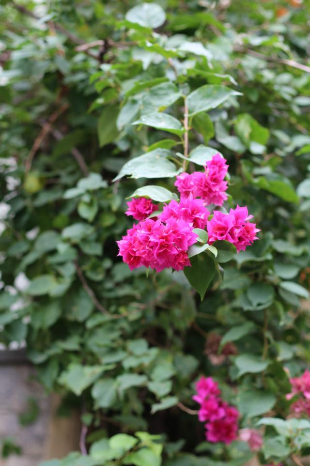 Flor de vila na Tijuca