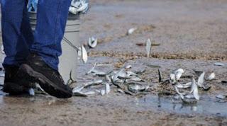Kalojen sataminen