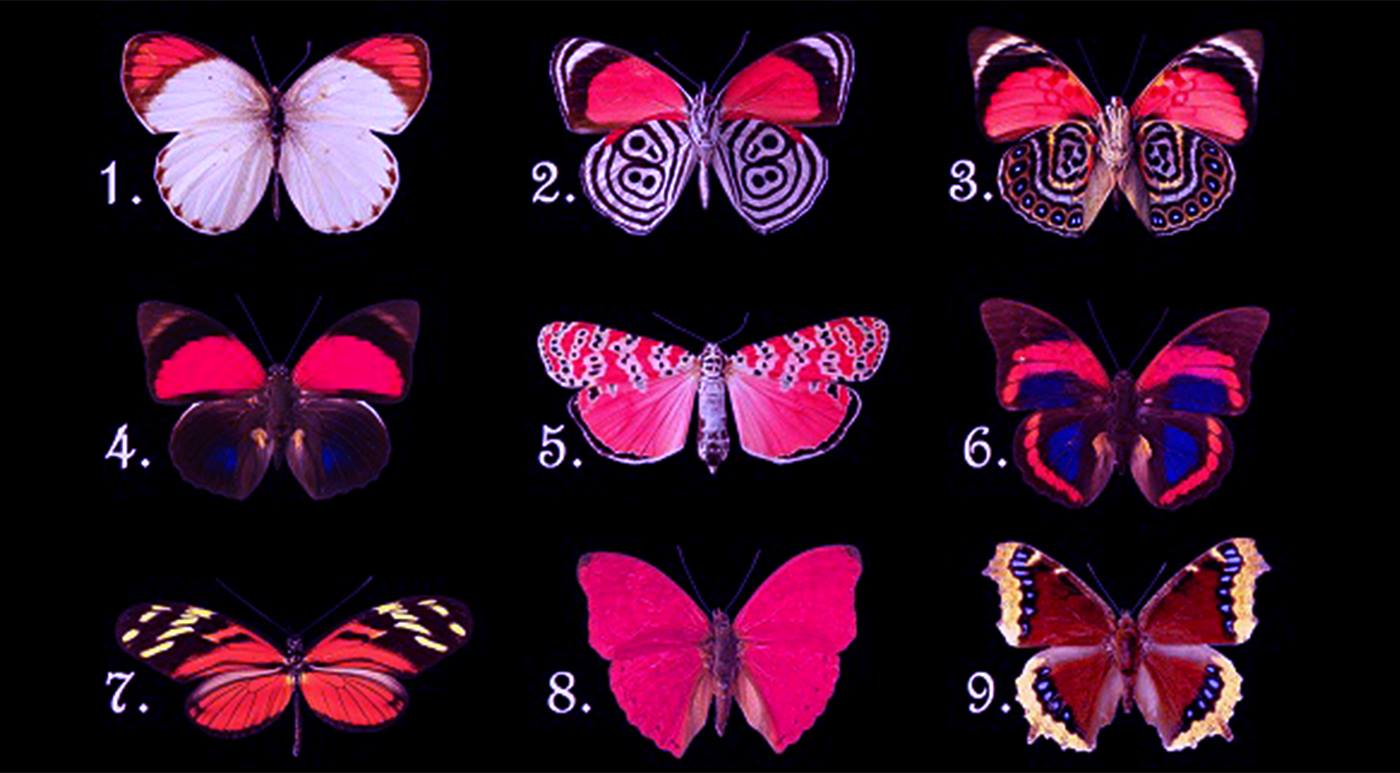 Выберите бабочку и узнайте тайны вашего подсознания
