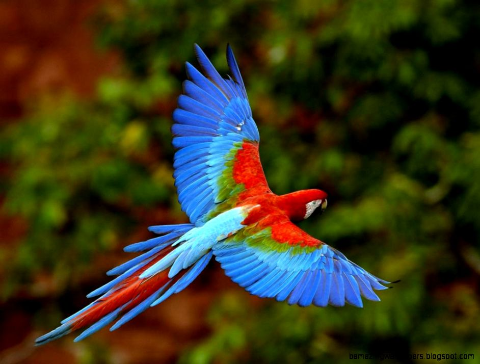 Real Rainforest Animals | Amazing Wallpapers