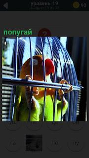 В большой клетке сидит цветной попугай с красным клювомЮ держась за клетку