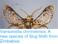 https://sciencythoughts.blogspot.com/2018/05/vansoniella-chirindensis-new-species-of.html