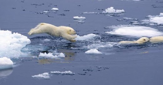 how to help polar bears from climate change
