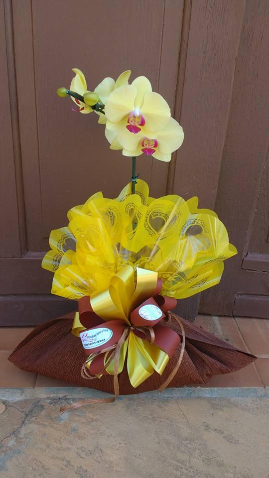 Floricultura Flores E Frutas Significados Das Flores Pelo Os