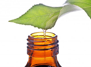 Tea tree oil and treatment of boils