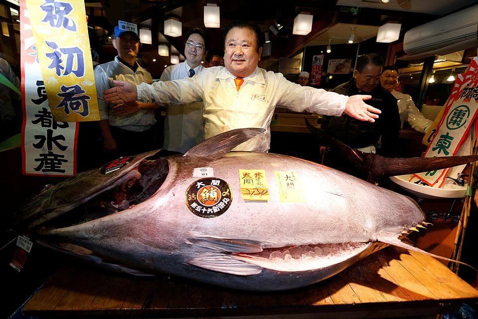 Ikan Tuna Sirip Biru