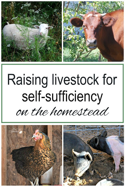 How raising small livestock such as goats and chickens will benefit your homestead.