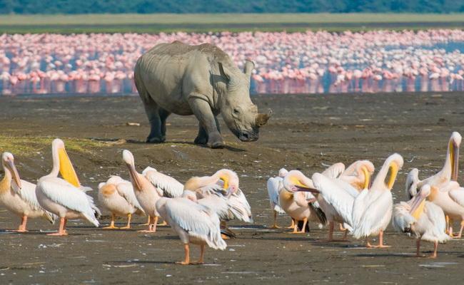 www.xvlor.com Lake Nakuru National Park is conservation ring for pink flamingo battalions