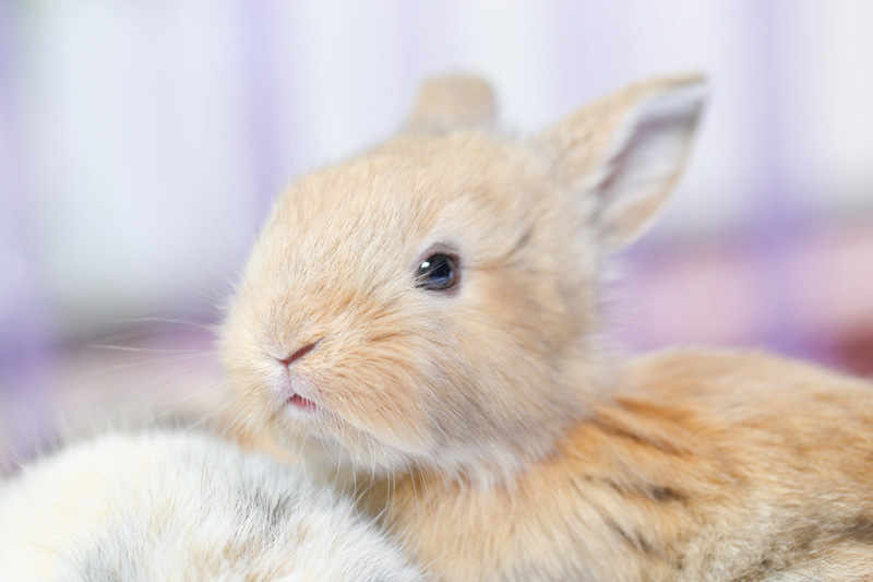 companion animal psychology taking care of your pet rabbit. Black Bedroom Furniture Sets. Home Design Ideas