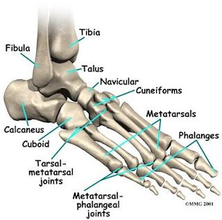 Pengobatan Refleksi Anantomi Tulang Kaki