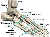 Pengobatan Refleksi | Anantomi Tulang Kaki