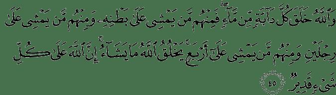 Surat An Nur ayat 45