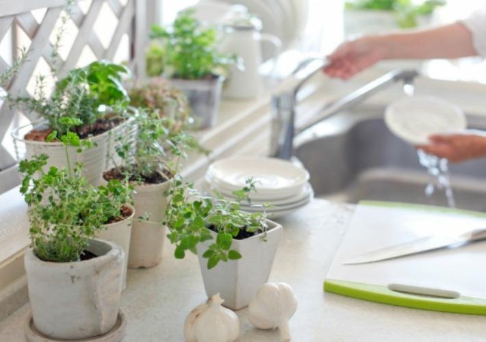 Salud en tu hogar gracias a las plantas