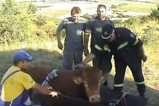 Αναταρραχή στην Πυροσβεστική για τη διάσωση ταύρου σε χαράδρα