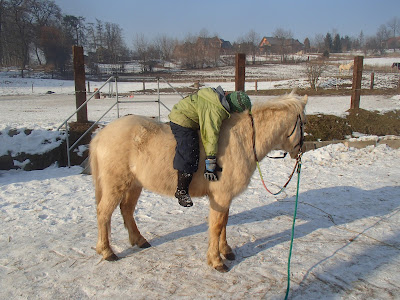 konie, jazda konna,jazda konna w zimie,jazda w terenie, zabawy na śniegu, zimowy piknik