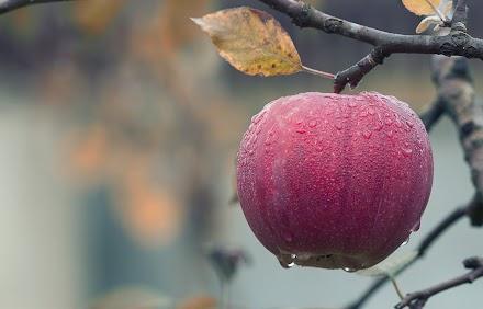 Buchstäblich cool | Die Ghost Apples aus Michigan
