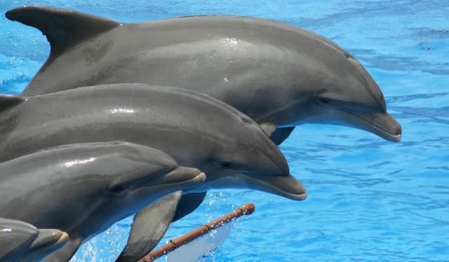 Informações sobre o Delphinus Cancún em Cancún
