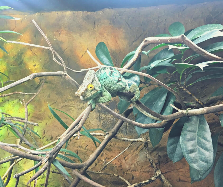Day Trips To Take In The UK During Easter Holidays | My boy loves the lizards...