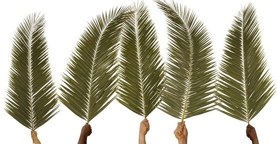 Palm Sunday Images, Pics